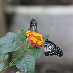 Jumalon Butterfly Sanctuary User Photo