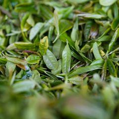 都勻茶文化博覽園用戶圖片