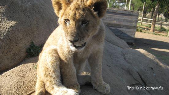 Lions Fun Park