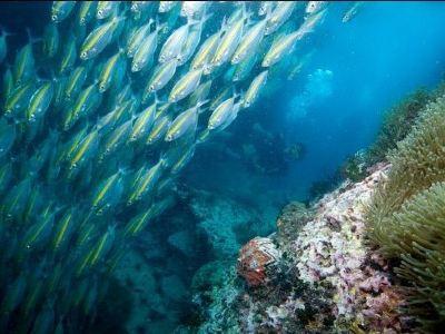 Thailand Dive and Sail