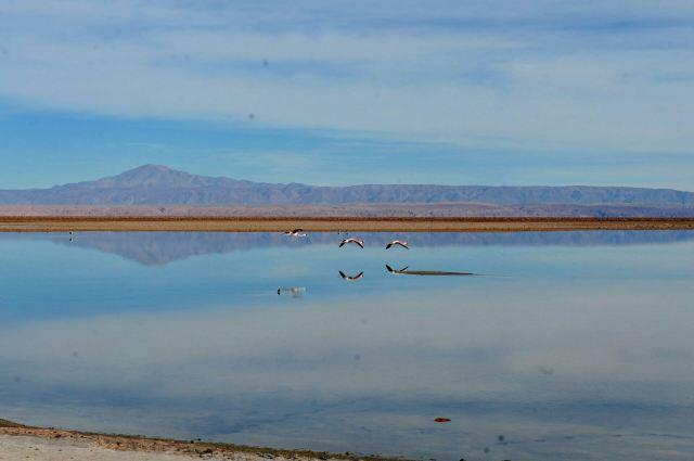 Altiplanic Lagoons