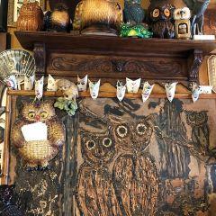 Owl Museum User Photo