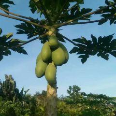 布隆賽鄉村文化旅遊區用戶圖片