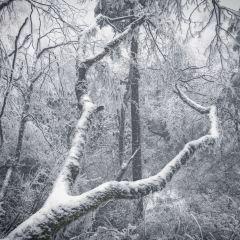 Emei Mountain User Photo