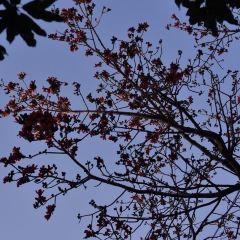 Cotton Tree Park User Photo