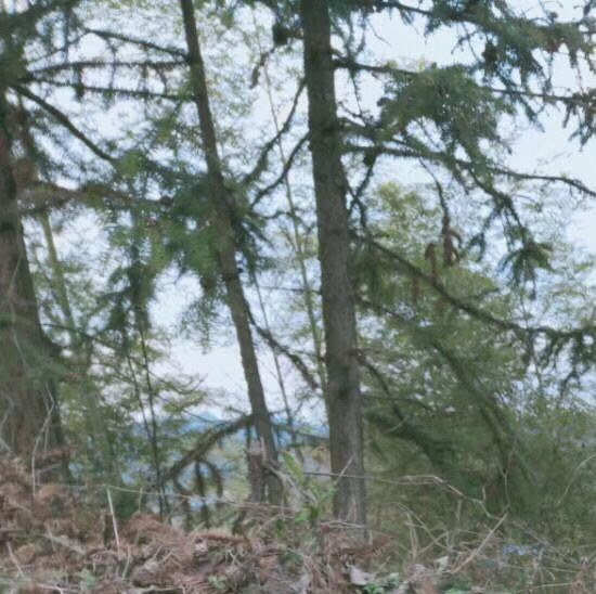 福壽山森林公園