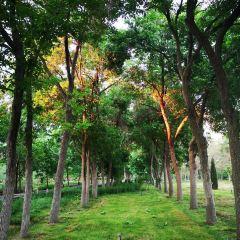 烏魯木齊植物園用戶圖片