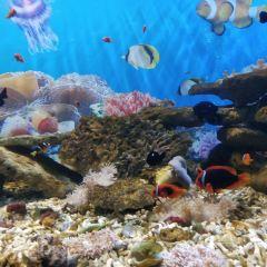 南通海底世界用戶圖片