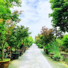 원장 뤼다오 단풍낙엽축제 여행 사진