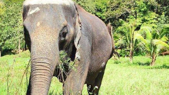 大象生態公園