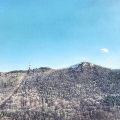 Mount Tampa用戶圖片