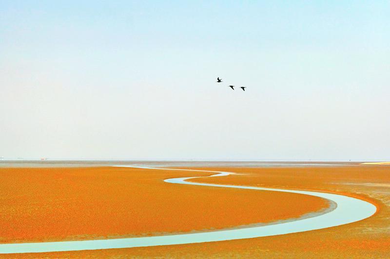 Binzhou Shell Dike Island