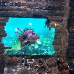 Aquaria KLCC User Photo