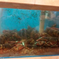 Sun Sui Wah Seafood Restaurant User Photo