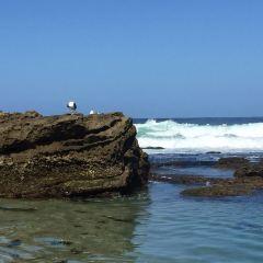 La Jolla Cove用戶圖片