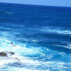 Tubbataha Reef National Park User Photo