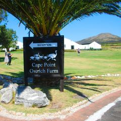Chandelier Game Lodge & Ostrich Show Farm User Photo
