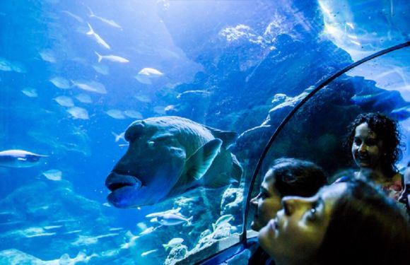 倫敦海洋生物水族館門票