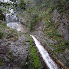 西瀑大森林用戶圖片