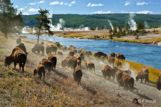 A Route to Explore Nature's Majesty: Travelling in Yellowstone Park