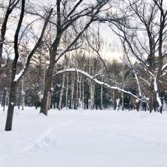 마루야마공원 여행 사진