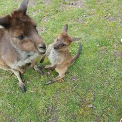Ballarat Wildlife Park User Photo