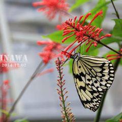 琉宮城蝶々園のユーザー投稿写真