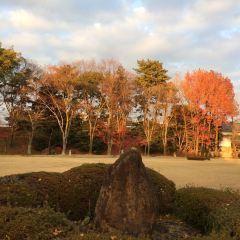 Nagoya Castle User Photo