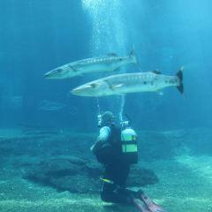 uShaka Marine World User Photo
