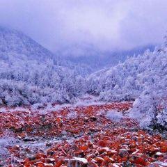 야자겅 홍석탄 공원 여행 사진