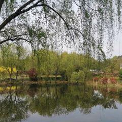 Hulishan User Photo