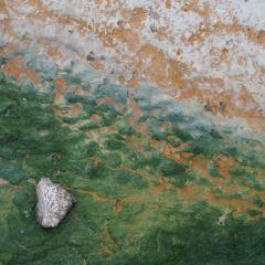 諾裡斯間歇泉盆地用戶圖片