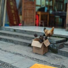 一步嶺土雞土菜館用戶圖片