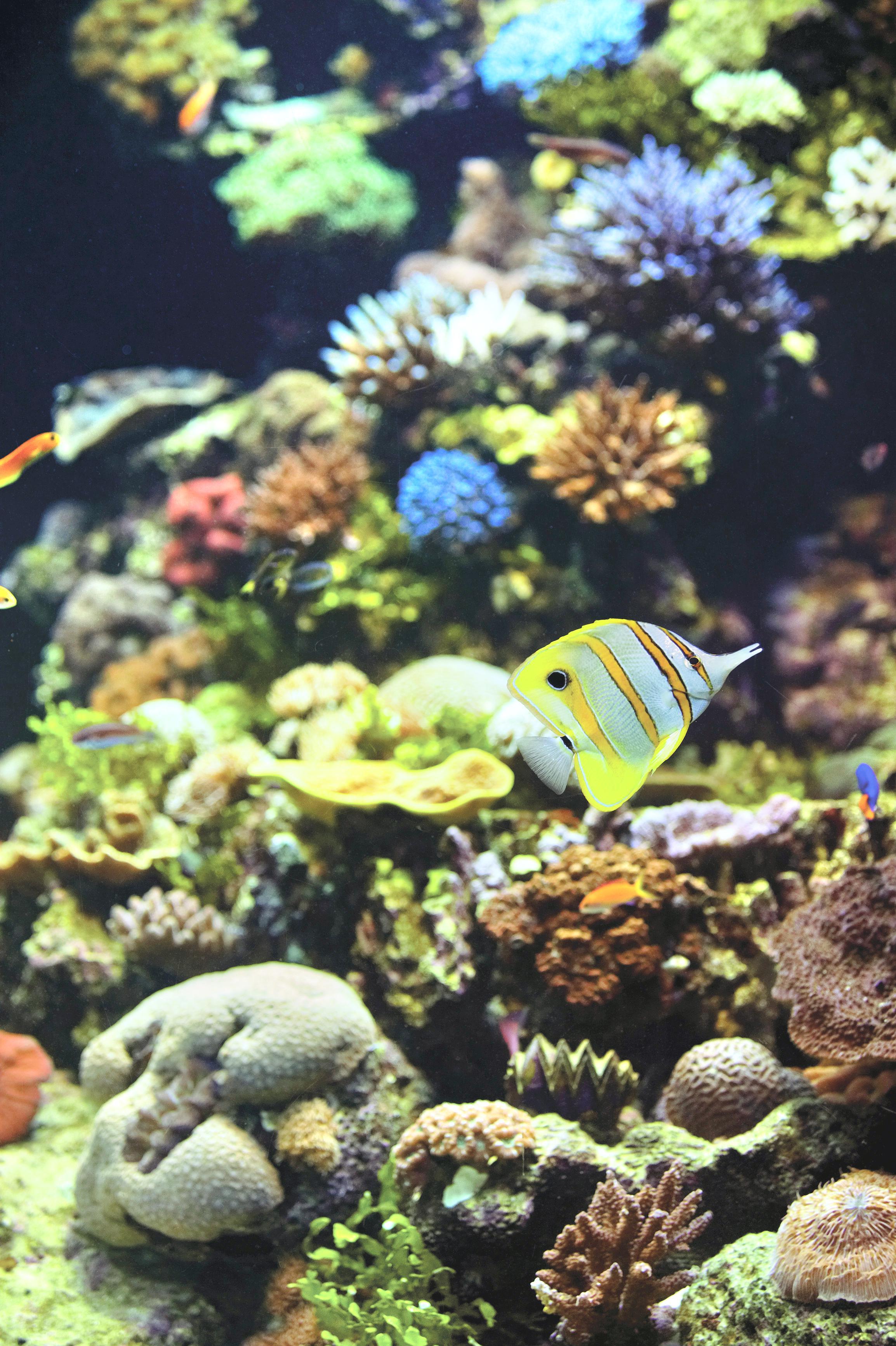 Reef HQ