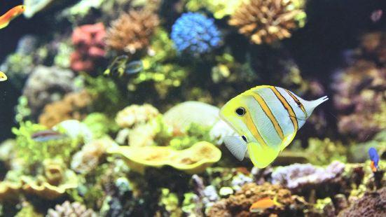 HQ 珊瑚礁水族館