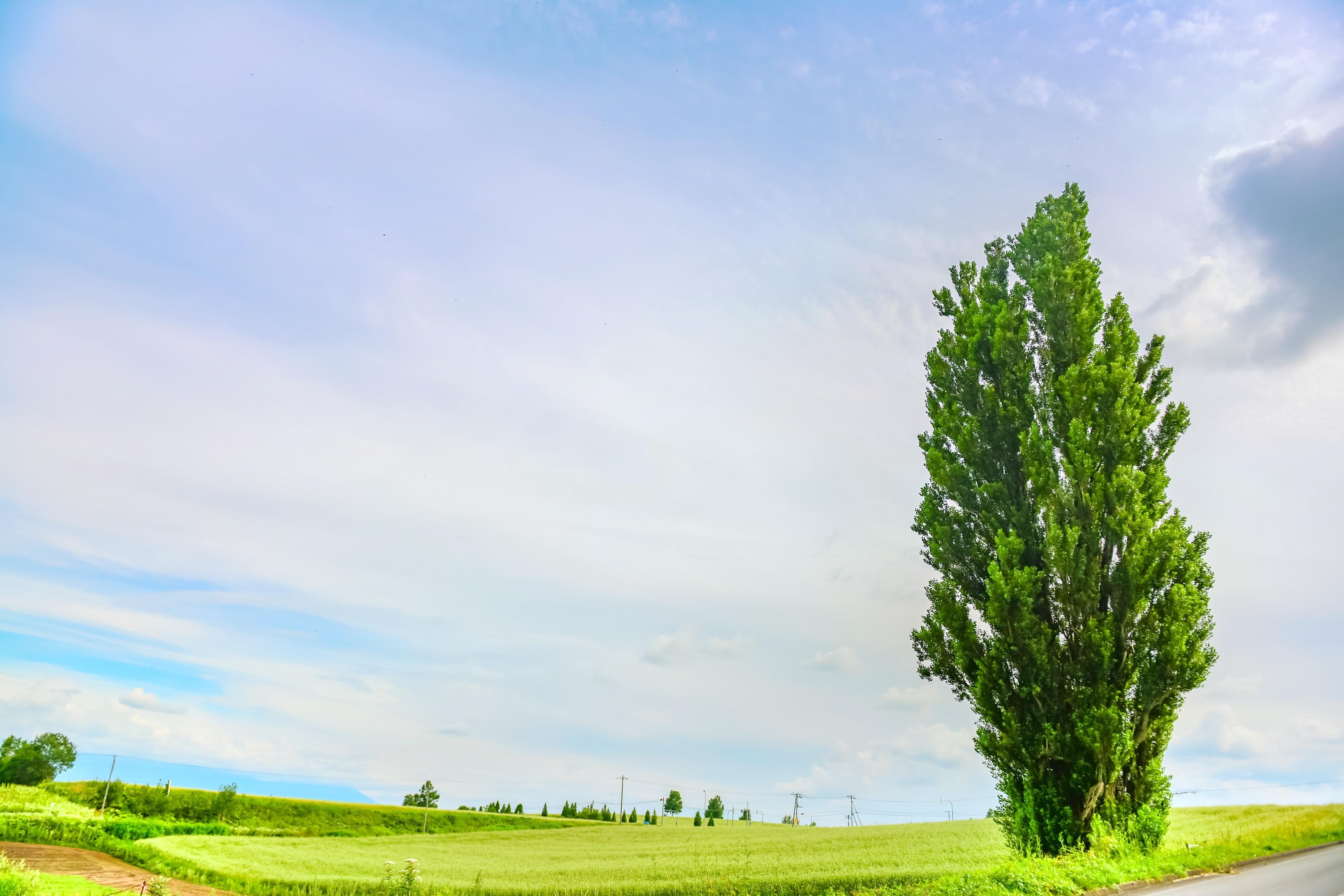 켄과메리의나무