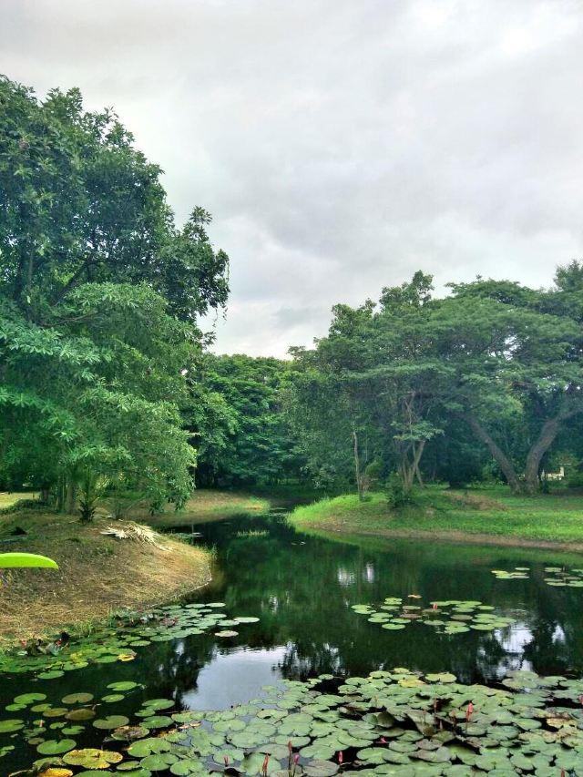 查安森林公園