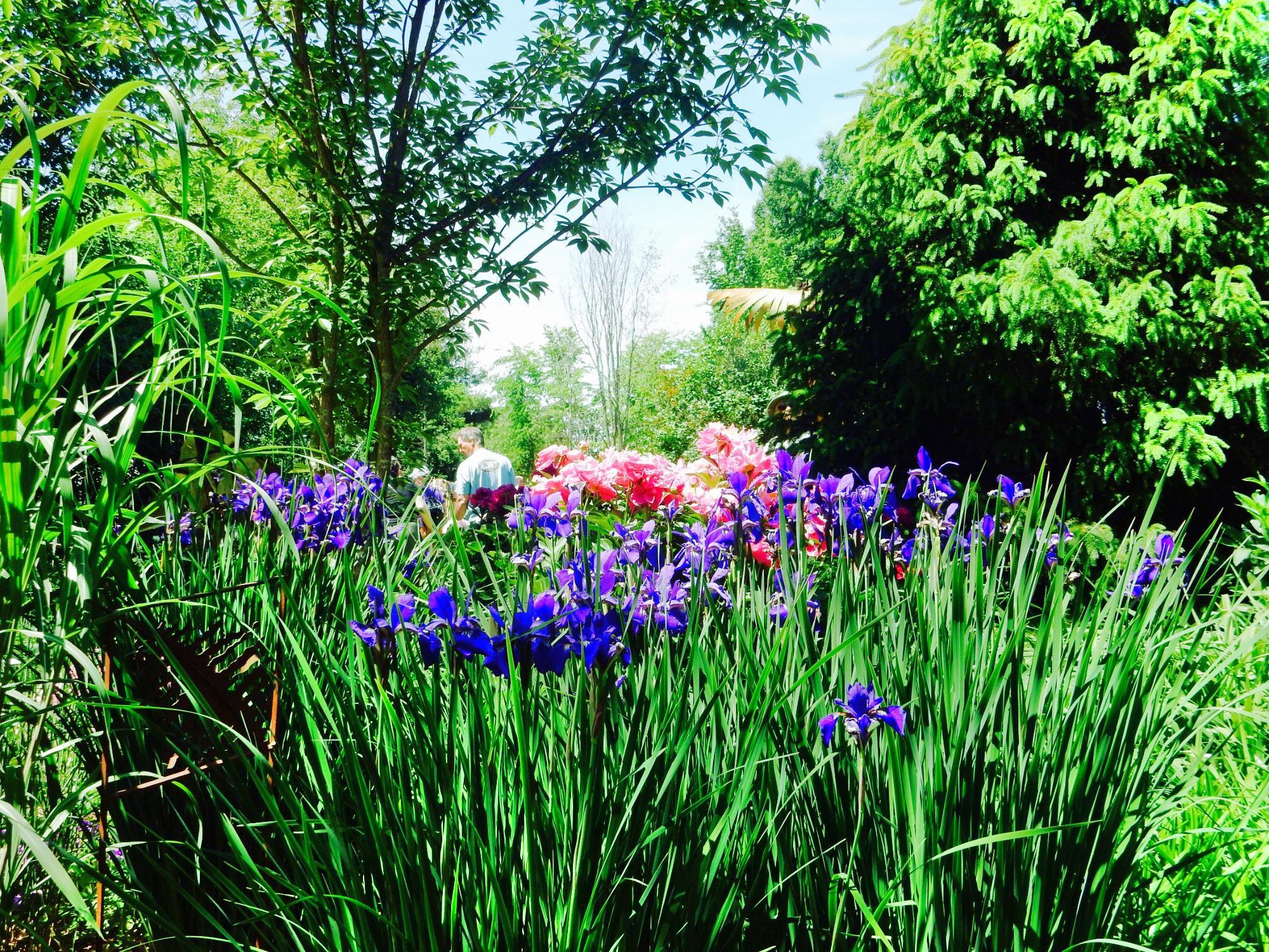 Kiwi Gardens
