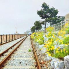 Ocean Rail Bike User Photo
