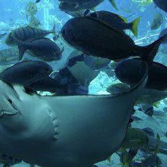 諾斯特姆海洋水族館用戶圖片
