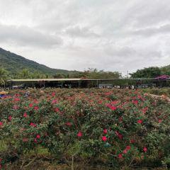 亞龍灣國際玫瑰谷用戶圖片