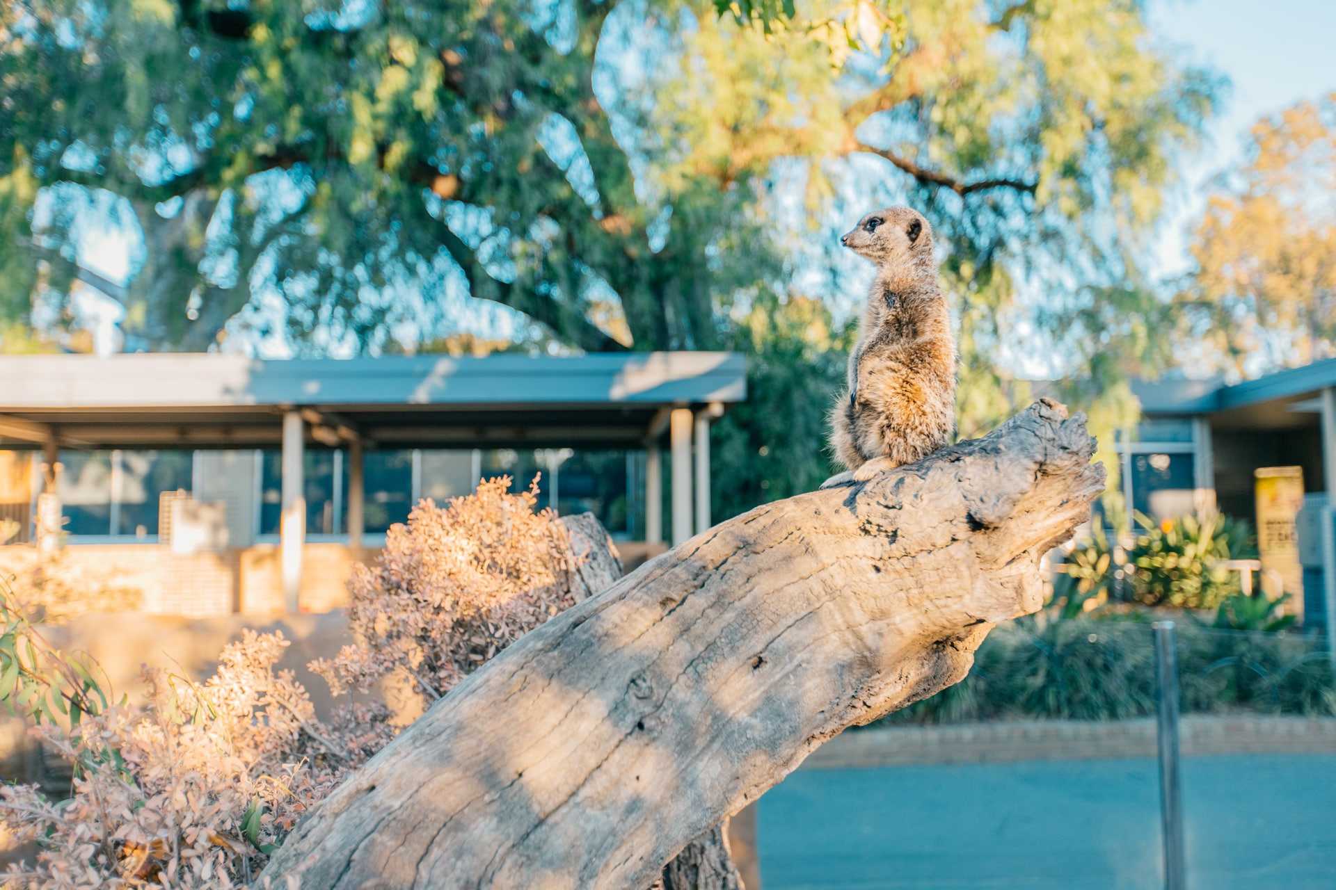 墨爾本動物園門票