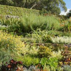 茵薇花園用戶圖片