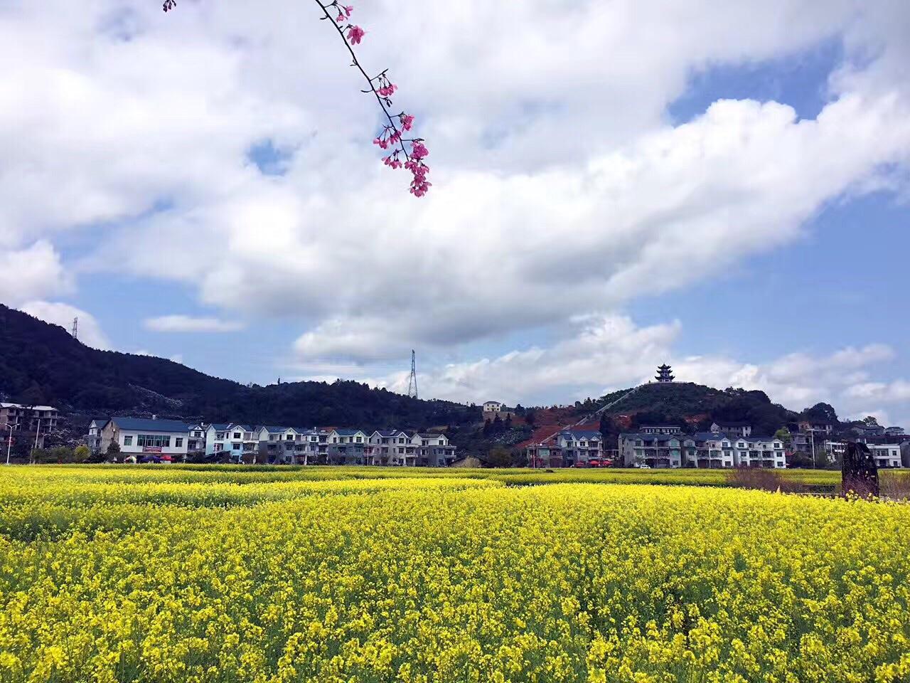 Pingpan Village Rape Flower