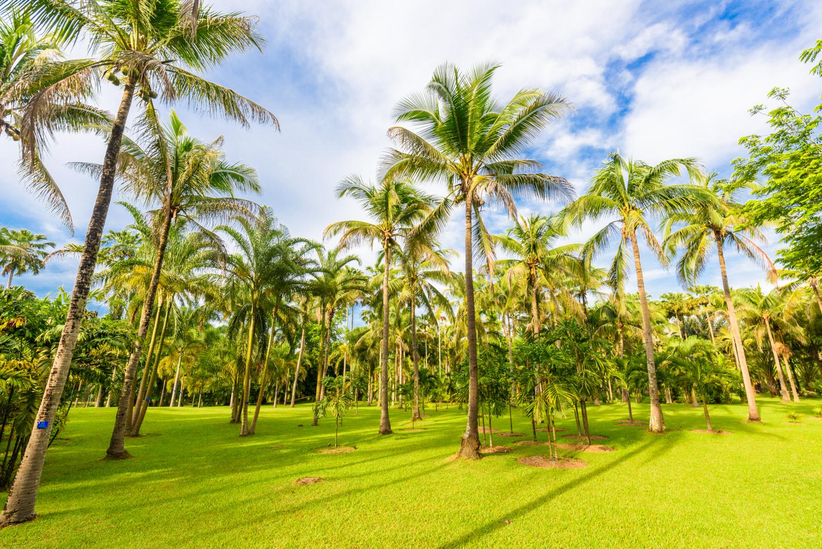 中科院西雙版納熱帶植物園