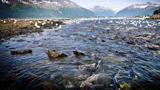 所羅門峽穀鮭魚孵化場