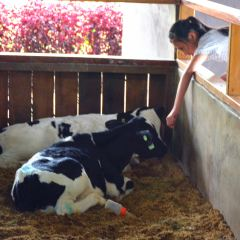 Desa奶牛農場用戶圖片