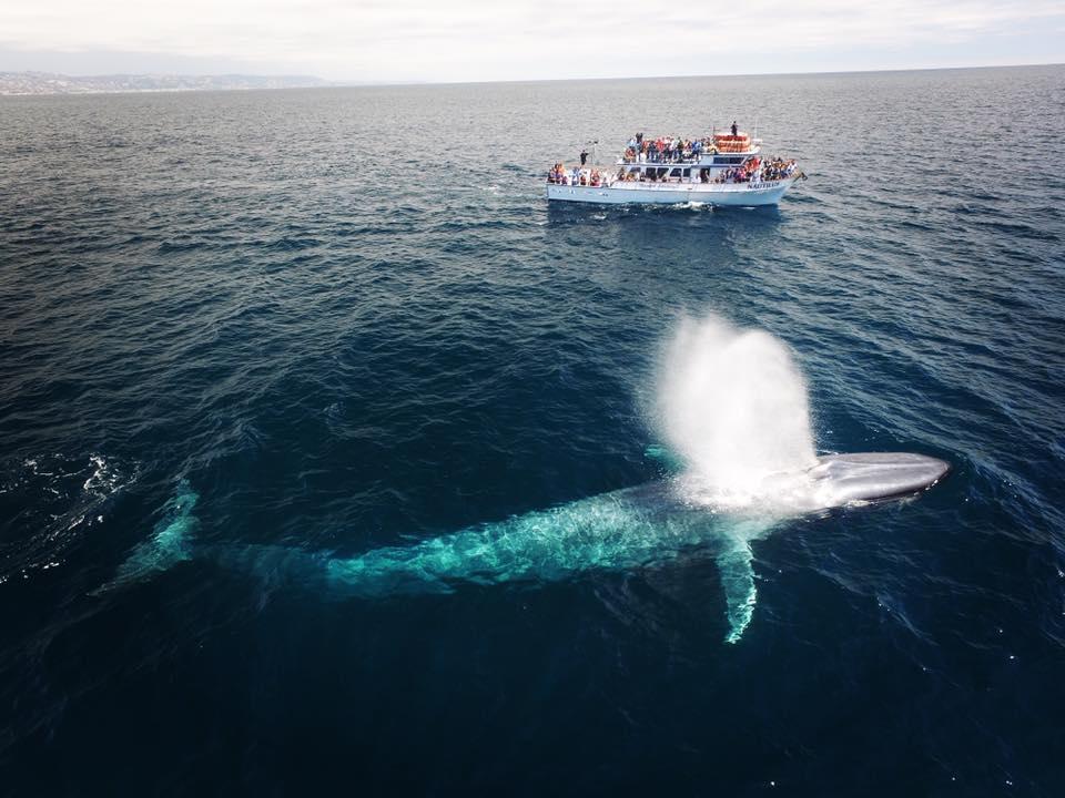 美國加州 2-2.5小時觀鯨之旅