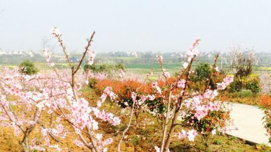 仙桃雲穀農業園