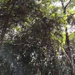 Qi Xian Yao Chi Wild Hot Springs User Photo